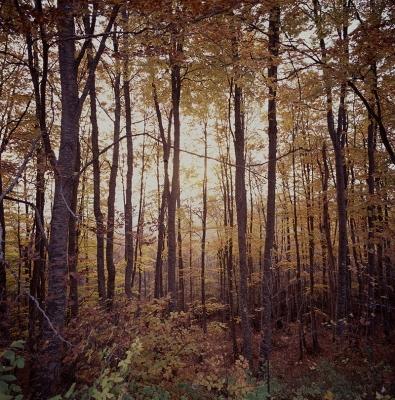 Δάσος στον Όλυμπο