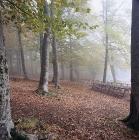 Αισθητικό δάσος Κισσάβου