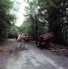 Ορεινός δρόμος στον Κίσσαβο